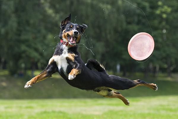 energetic dog